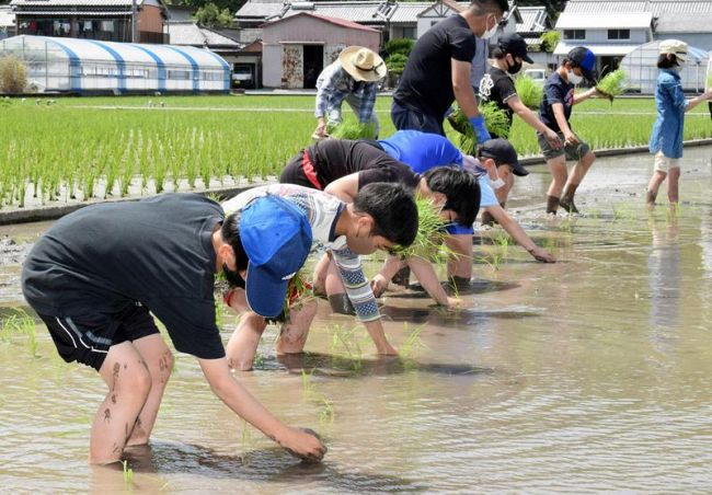 横一列になって田植え体験をする児童たち(高知市五台山)