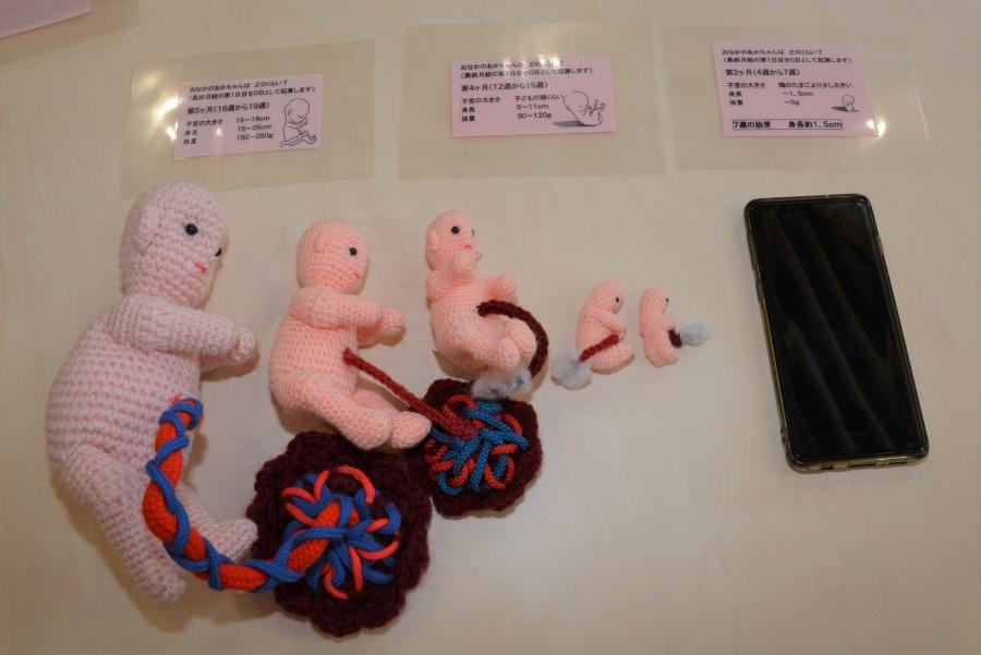 胎児の大きさを実感できる人形。スマホと比べてみました
