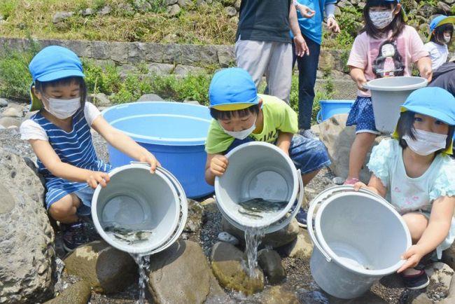 安田川にアユを放流する園児たち(安田町正弘)