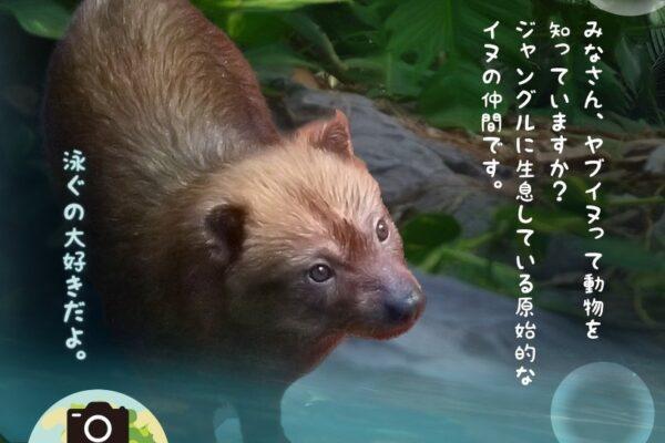 高知県立のいち動物公園で「ようこそ ヤブイヌ展」|夏にぴったりのイベントも開催!
