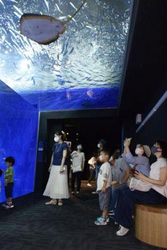 昨年9月の4連休初日。観光客でにぎわう県立足摺海洋館「SATOUMI」(土佐清水市三崎)