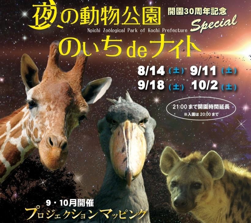 【10月2日(土)は開催予定です】高知県立のいち動物公園で「のいちdeナイト」|夜の動物たちを見に行こう