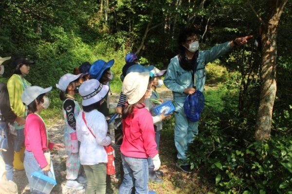 【定員に達しました】高知市で「バナナトラップをつかった昆虫観察会」 カブトムシやクワガタが採れるかも?!申し込みはお早めに!