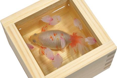 高知県立美術館で「深堀隆介展 金魚鉢、地球鉢」|本物の金魚?絵?驚きの作品展が四国初開催