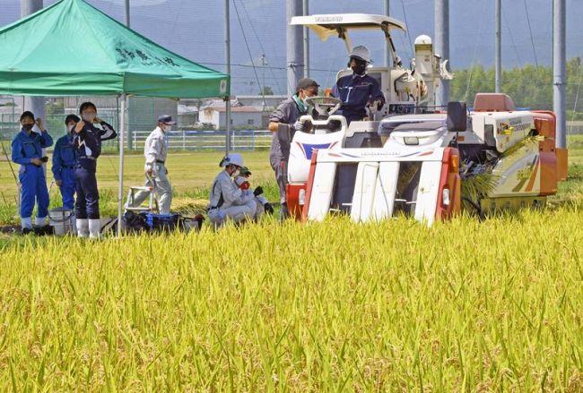 コンバインで黄金に色づいた稲穂を収穫する部員たち(南国市上野田)