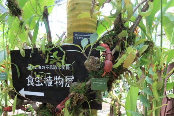 高知県立牧野植物園で「食虫植物展」 虫を食べる植物の生態は?