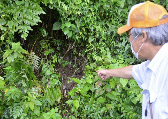 自生していた植物が盗掘された跡。土ごとごっそり持ち去られている(四万十町)