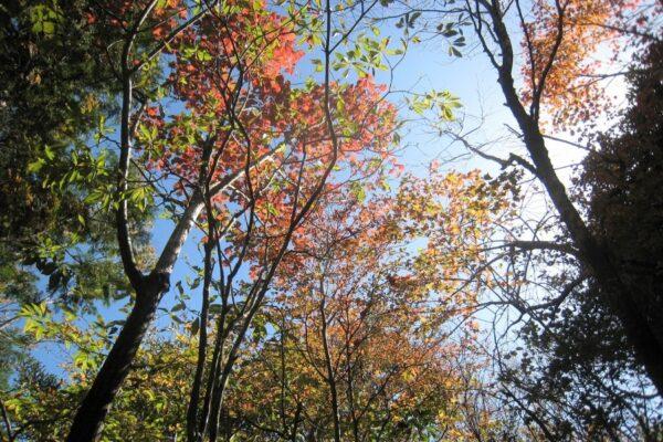 高知市工石山青少年の家で「はじめての親子登山」|赤良木園地を目指そう!アウトドア体験もできます