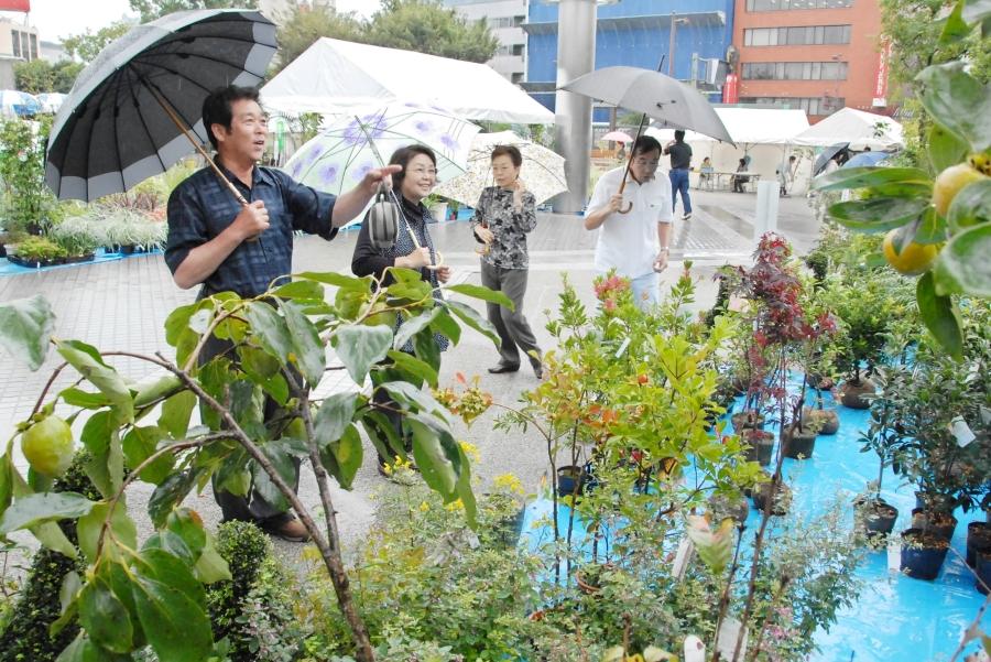 高知市の中央公園で「都市緑化祭」 木工体験教室、花の種や球根の無料配布があります